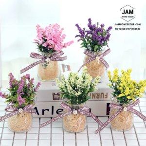 Chậu hoa oải hương bằng thủy tinh trang trí